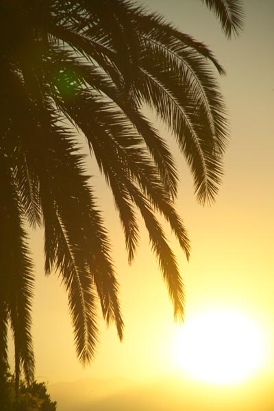 Picture of Palm Tree, Lake Garda, Italy - Palma, Lago di Garda, Italia - Free Pictures - FreeFoto.com