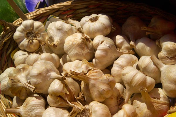 Picture of Garlic - Free Pictures - FreeFoto.com