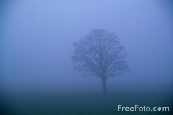 Picture of Tree on a Misty Morning - Free Pictures - FreeFoto.com