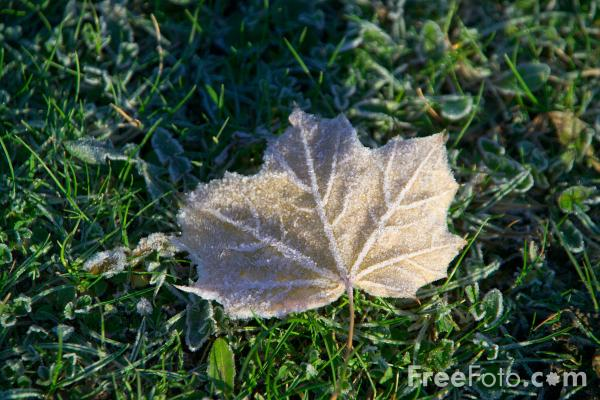 Picture of Frost covered leaf - Free Pictures - FreeFoto.com