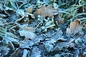 Frosty Morning has been viewed 7644 times