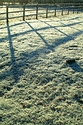 Frosty Morning has been viewed 7498 times