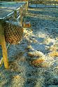 Frosty Morning has been viewed 7799 times