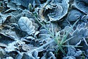 Frosty Morning has been viewed 10552 times