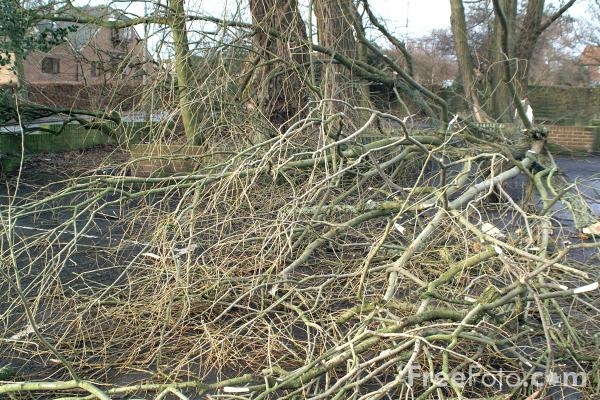 Picture of Fallen Tree - Free Pictures - FreeFoto.com