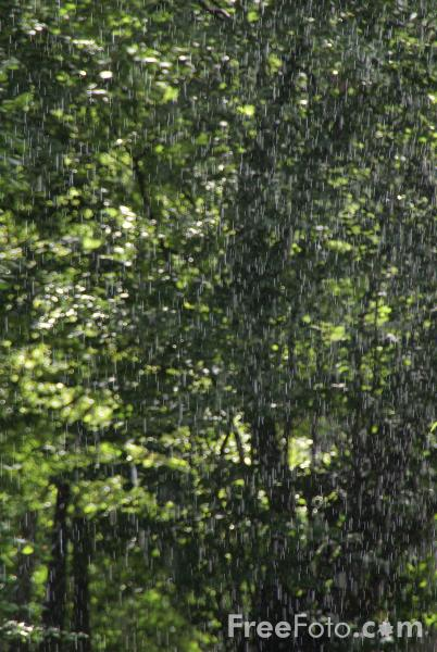 Picture of Shower of rain - Free Pictures - FreeFoto.com