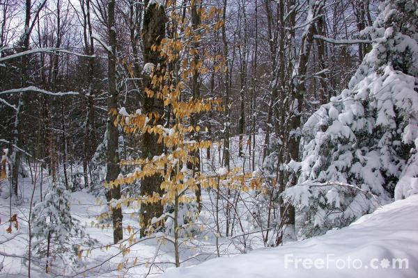 Picture of Snow - Free Pictures - FreeFoto.com