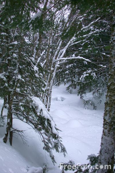 Picture of Snow in the forest - Free Pictures - FreeFoto.com