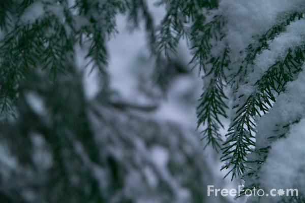 Picture of Winter Scene - Branches Covered In Snow - Free Pictures - FreeFoto.com
