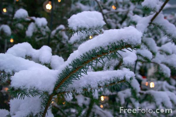 Picture of Snow covered Christmas Tree - Free Pictures - FreeFoto.com