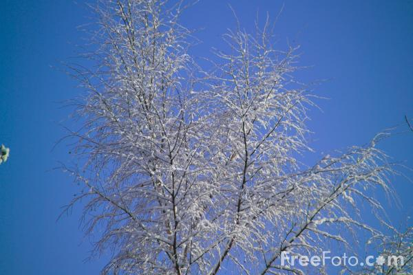 Picture of Winter Scene - Tree Branches Covered in Snow - Free Pictures - FreeFoto.com