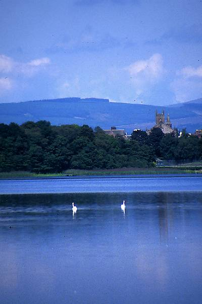 Picture of Nature Reserve, Castle Loch, Lochmaben - Free Pictures - FreeFoto.com
