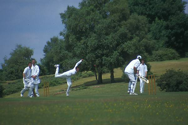 Picture of Cricket - Free Pictures - FreeFoto.com