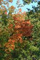 Image Ref: 19-01-53 - Autumn color in New England, Viewed 5604 times