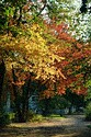 Autumn color in New England has been viewed 9043 times