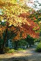 Autumn color in New England has been viewed 10339 times