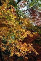 Image Ref: 19-01-57 - Autumn color in New England, Viewed 5656 times
