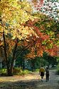 Autumn color in New England has been viewed 8692 times