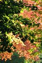 Image Ref: 19-01-62 - Autumn color in New England, Viewed 5825 times