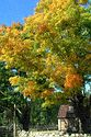 Image Ref: 19-01-66 - Autumn color in New England, Viewed 5792 times