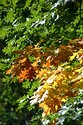 Image Ref: 19-01-67 - Autumn color in New England, Viewed 5844 times