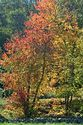 Autumn color in New England has been viewed 7780 times