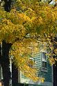 Image Ref: 19-01-71 - Autumn color in New England, Viewed 5393 times
