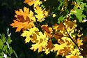 Image Ref: 19-02-26 - Autumn Leaves, Viewed 6377 times