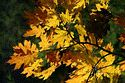 Image Ref: 19-02-27 - Autumn Leaves, Viewed 5559 times