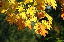 Image Ref: 19-02-28 - Autumn Leaves, Viewed 5663 times