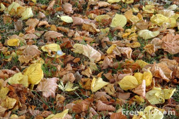 Picture of Autumn Leaves - Free Pictures - FreeFoto.com