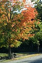 Image Ref: 19-02-58 - Autumn Leaves, Viewed 4922 times