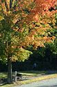 Image Ref: 19-02-59 - Autumn Leaves, Viewed 5174 times