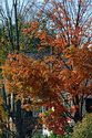 Image Ref: 19-03-51 - Autumn color in Vermont, Viewed 6373 times