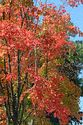 Image Ref: 19-03-57 - Autumn color in Vermont, Viewed 6584 times