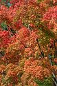 Image Ref: 19-03-58 - Autumn color in Vermont, Viewed 7089 times