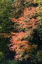 Image Ref: 19-03-62 - Autumn color in Vermont, Viewed 6010 times