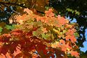 Image Ref: 19-04-10 - Autumn color in New England, Viewed 5907 times