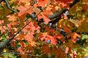 Image Ref: 19-04-11 - Autumn color in New England, Viewed 5964 times