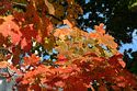 Image Ref: 19-04-12 - Autumn color in New England, Viewed 6103 times
