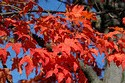 Image Ref: 19-04-3 - Autumn color in New England, Viewed 7579 times
