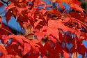 Image Ref: 19-04-4 - Autumn color in New England, Viewed 7957 times