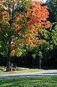 Image Ref: 19-04-54 - Autumn color in New England, Viewed 6118 times