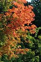 Image Ref: 19-04-55 - Autumn color in New England, Viewed 5902 times
