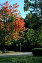Image Ref: 19-04-56 - Autumn color in New England, Viewed 5923 times