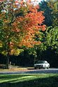 Image Ref: 19-04-57 - Autumn color in New England, Viewed 5554 times