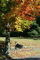 Image Ref: 19-04-62 - Autumn color in New England, Viewed 5977 times
