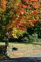 Image Ref: 19-04-63 - Autumn color in New England, Viewed 5695 times