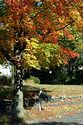 Image Ref: 19-04-64 - Autumn color in New England, Viewed 5830 times