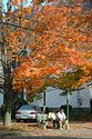 Image Ref: 19-04-65 - Autumn color in New England, Viewed 6156 times